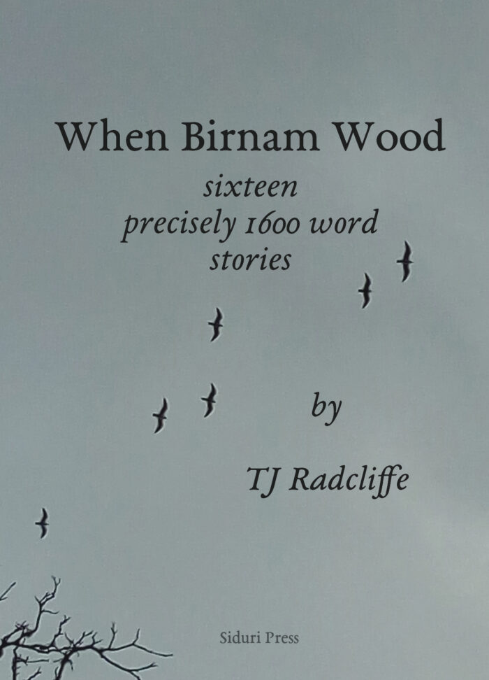 When Birnam Wood cover image